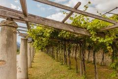 Die typische landwirtschaftliche Architektur der Weinberge von Carema, Piemont, Italien Stockfotos