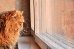 ?at die uit het venster kijkt Royalty-vrije Stock Afbeeldingen