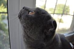 ?at die uit het venster kijkt Stock Afbeeldingen