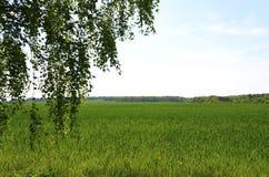 Die umgebende Landschaft von Berlin stockbild