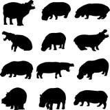 Die umreiß des Flusspferds in Afrika Stockbild