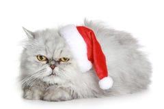 Die unbefriedigte graue Katze in einem Weihnachtshut Lizenzfreie Stockfotos
