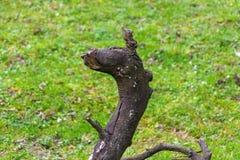 Die ungewöhnliche Wurzel eines alten Baums Lizenzfreies Stockbild
