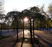 Die untergehende Sonne scheint durch das Laub der Bäume im Park lizenzfreie stockfotos