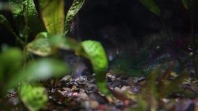 Die Unterseite eines Aquariumsaquariums mit exotischen Anlagen stock footage