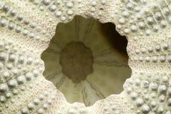 Die Unterseite eines Seeigels Stockfotos