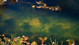 Die Unterseite von The Creek Stockbild