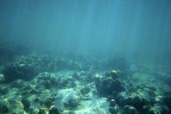 Die Unterwasserwelt Stockfotos