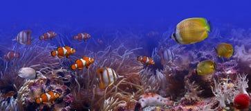 Die Unterwasserwelt Stockbild