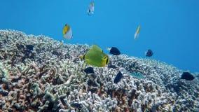 Die Unterwasserwelt des Meeres stockfotografie