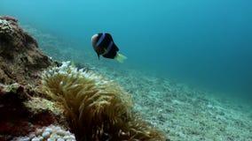 Die Unterwasserwelt von Bali Indonesien stock footage