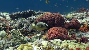 Die Unterwasserwelt von Bali Indonesien stock video footage