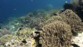 Die Unterwasserwelt von Bali Indonesien Marine Life stock footage