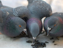 Die Vögel Lizenzfreie Stockbilder