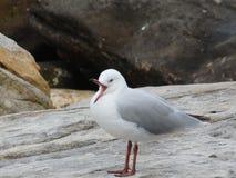 Die Vögel Lizenzfreie Stockfotos