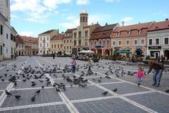 Die Vögel auf dem Rats-Quadrat. Lizenzfreies Stockbild