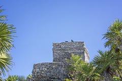 Die Vögel, die auf acient Mayagebäude von Tulum stillstehen, ruiniert Mexiko mit tropischen Anlagen im Vordergrund und im Raum fü Lizenzfreies Stockbild