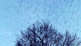 Die Vögel fliegen weg von der Baumkrone