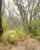 Die Vegetation Lizenzfreies Stockbild