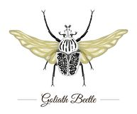 Die Vektorhand, die gezeichnet wurde, färbte tropischen Goliath-Käfer mit den Flügeln, die auf weißem Hintergrund lokalisiert wur lizenzfreie abbildung