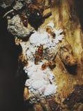 Die verblaßten Ameisen Lizenzfreies Stockbild