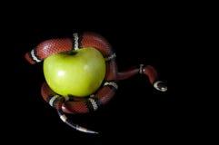 Die verbotene Frucht Lizenzfreies Stockfoto