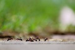 Die Versammlung der Ameisen Stockbild
