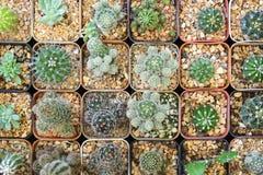Die verschiedene Art des Kaktus in der Flachlageszene Lizenzfreie Stockfotografie