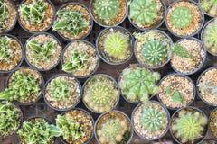 Die verschiedene Art des Kaktus in der Flachlageszene Lizenzfreie Stockbilder