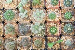 Die verschiedene Art des Kaktus in der Flachlageszene Stockfoto