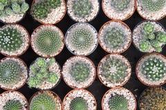 Die verschiedene Art des Kaktus in der Flachlageszene Stockfotografie