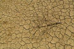 Die verwelkte Niederlassung liegt auf der gebrochenen Erde von der Hitze Stockfotografie