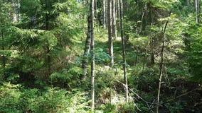 Die Videoshows das Umweltproblem - vor dem hintergrund des hellen saftigen Laubs im Wald ist ein enormer Stapel des Abfalls stock video footage
