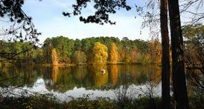 Die Vielfalt von Farben des Herbstes Nationalpark, Serebryany Bor Moskau, Russland Lizenzfreies Stockbild