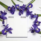 Die Violet Irises-xiphium Knolleniris, Iris sibirica auf weißem Hintergrund mit Raum für Text Draufsicht, flache Lage Lizenzfreies Stockbild