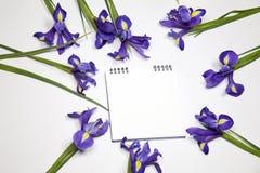 Die Violet Irises-xiphium Knolleniris, Iris sibirica auf weißem Hintergrund mit Raum für Text Draufsicht, flache Lage Lizenzfreie Stockbilder