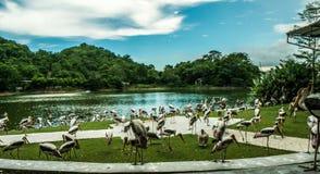 Die Vogelgruppe Stockfoto