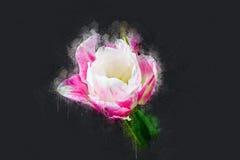 Die vollerblühte Tulpe im Mai Stockfotos