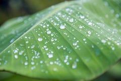 Die vollständige Abbildung des Wassertropfens? beschreiben zum Safe unsere Bäume in der Welt Stockfotografie