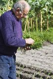 Die Vorbereitung der Anlagen für das Pflanzen Lizenzfreie Stockfotografie