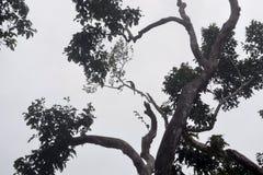 Die Wälder lizenzfreies stockfoto