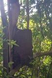 Die Wälder stockbilder