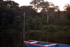Die Wälder lizenzfreie stockbilder