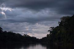 Die Wälder stockfotos