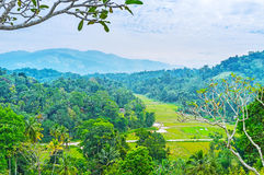Die Wälder und die Ackerlande von Udunuwara Lizenzfreie Stockbilder