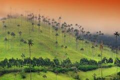 Die WachsPalmen von Cocora-Tal sind der nationale Baum, das Symbol von Kolumbien und die größte Palme World's lizenzfreies stockbild