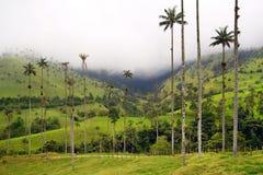 Die WachsPalmen von Cocora-Tal sind der nationale Baum, das Symbol von Kolumbien und die größte Palme World's stockfoto
