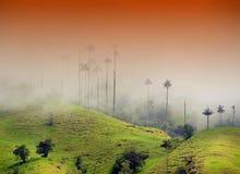 Die WachsPalmen von Cocora-Tal sind der nationale Baum, das Symbol von Kolumbien und die größte Palme World's lizenzfreie stockbilder