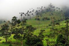 Die WachsPalmen von Cocora-Tal sind der nationale Baum, das Symbol von Kolumbien und die größte Palme World's lizenzfreie stockfotos