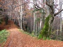 Die Waldlandschaft Lizenzfreie Stockbilder